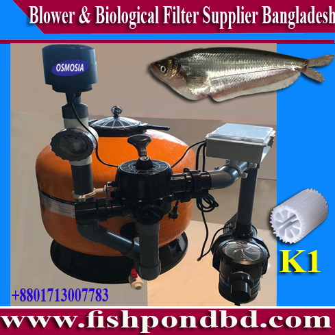 Aquaculture Indoor & Outdoor Fish Farming Equipemt :: Indoor